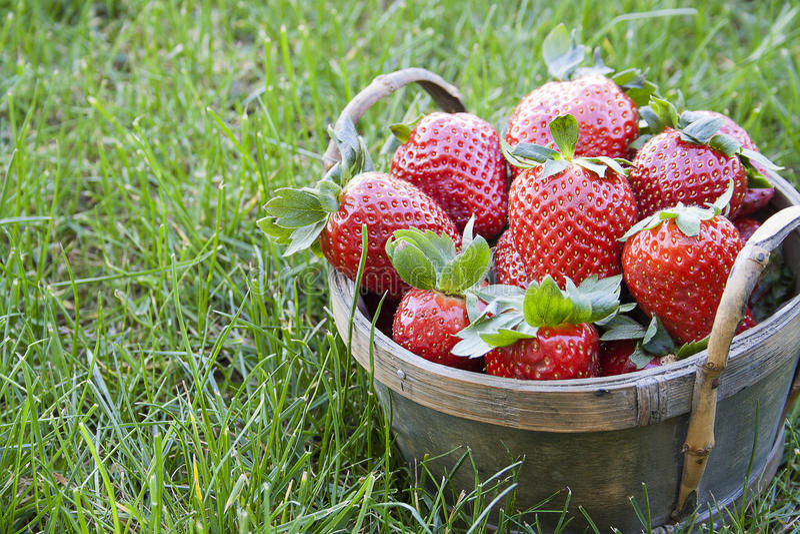 Aardbeien in een mand royalty-vrije stock afbeeldingen