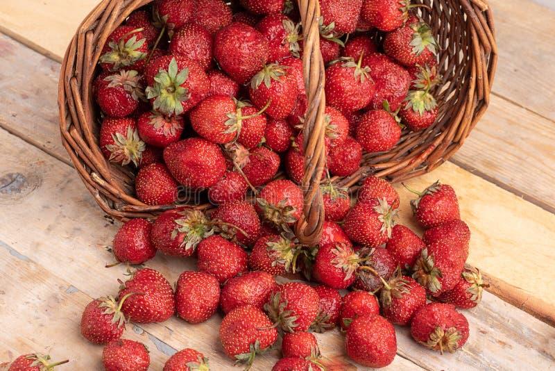 Aardbeien in een mand in de tuin stock foto's