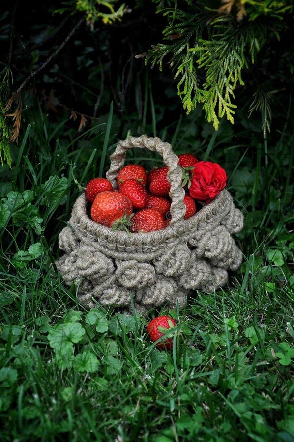 Aardbeien in een rieten mand stock fotografie
