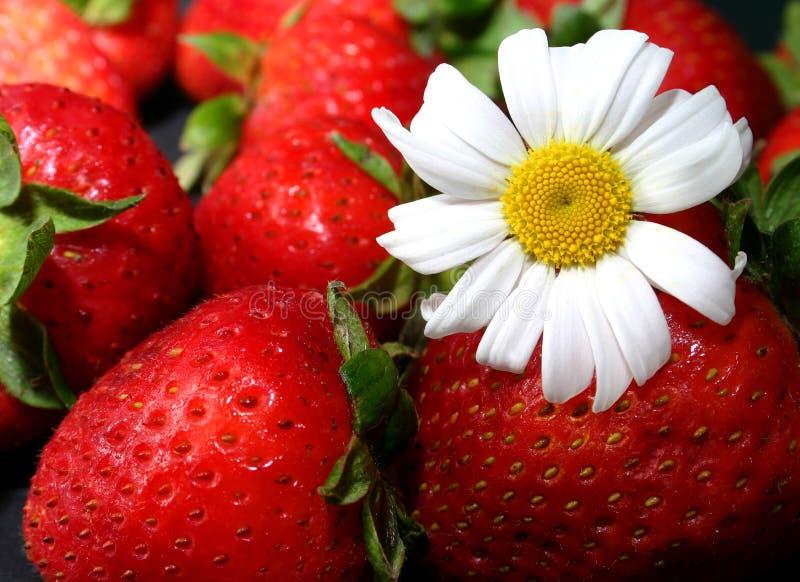 Aardbeien en madeliefje stock afbeeldingen
