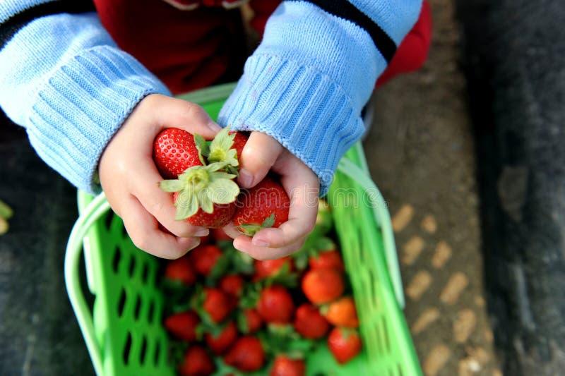 Aardbeien in handen royalty-vrije stock fotografie
