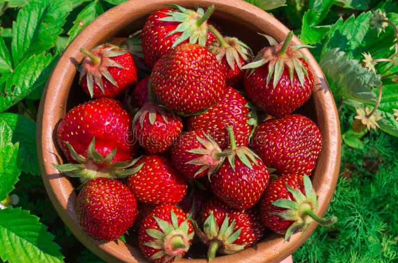 Aardbeien op wit Rijpe Aardbei in de Fruittuin, Oud W stock foto