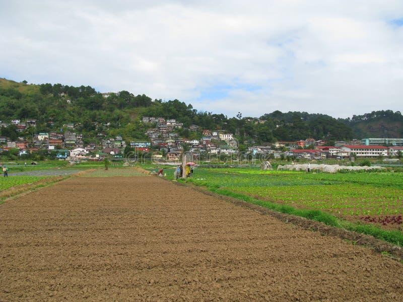 Aardbeilandbouwbedrijf, Baguio, Filippijnen stock afbeelding