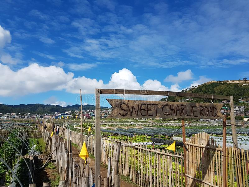 Aardbeilandbouwbedrijf bij La Trinidad Benguet Philippines stock foto's