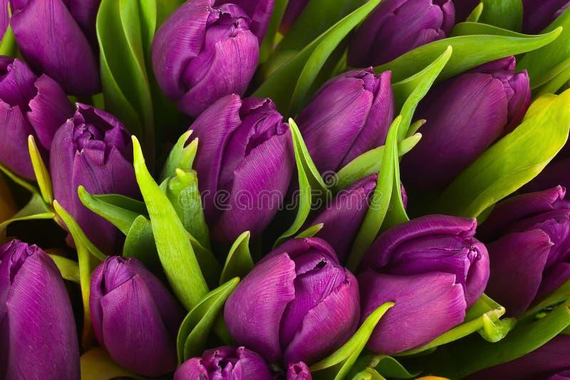 Aardboeket van purpere tulpen voor gebruik als achtergrond stock afbeeldingen