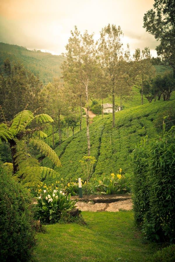 Aardbomen en heuvels Cameron Highlands Sri Lanka stock afbeelding