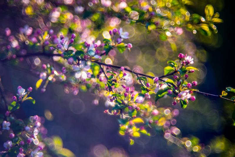 Aarddetail in de lente royalty-vrije stock afbeeldingen