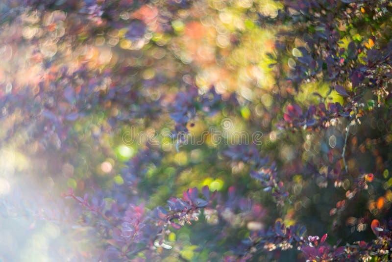 Aarddetail van bladeren en bokeh stock afbeelding