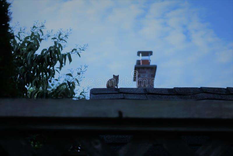 Aardeekhoorn in de ochtend vroeg wordt gezien die royalty-vrije stock afbeeldingen
