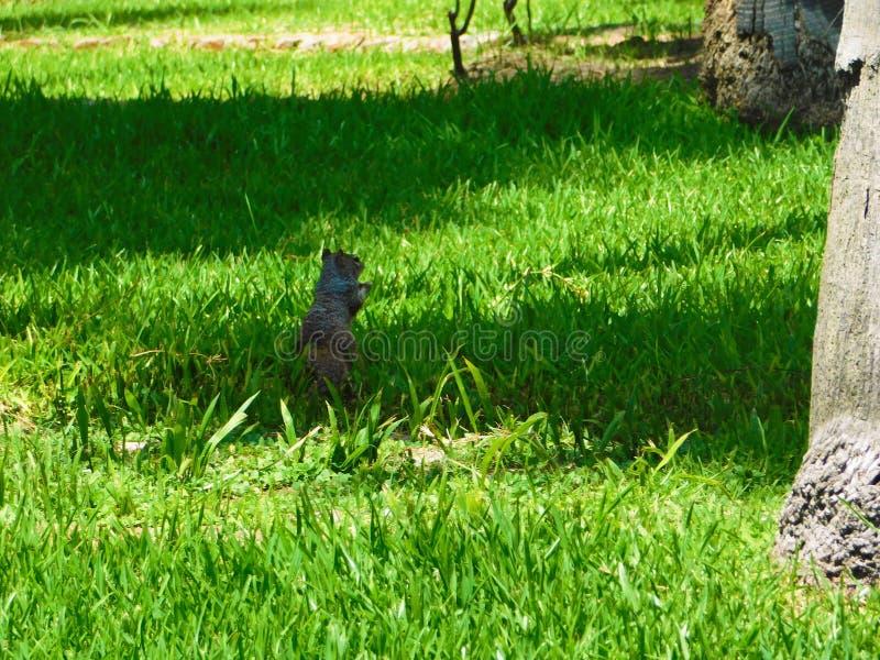 Download Aardeekhoorn Die Aan Zijn Moeder In Zonlicht Wachten Stock Afbeelding - Afbeelding bestaande uit boom, tuin: 107707045
