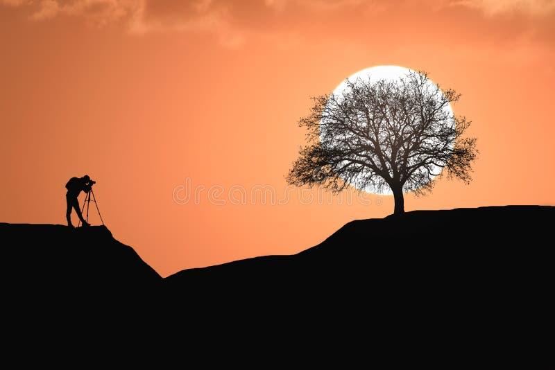 Aardfotograaf en eiken boomsilhouetten bij zonsondergang stock illustratie