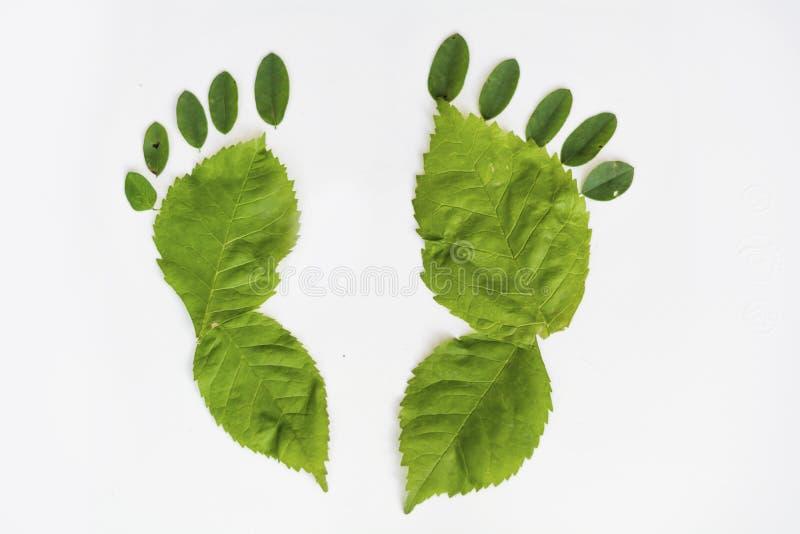 Aardgang - groene voet stock foto
