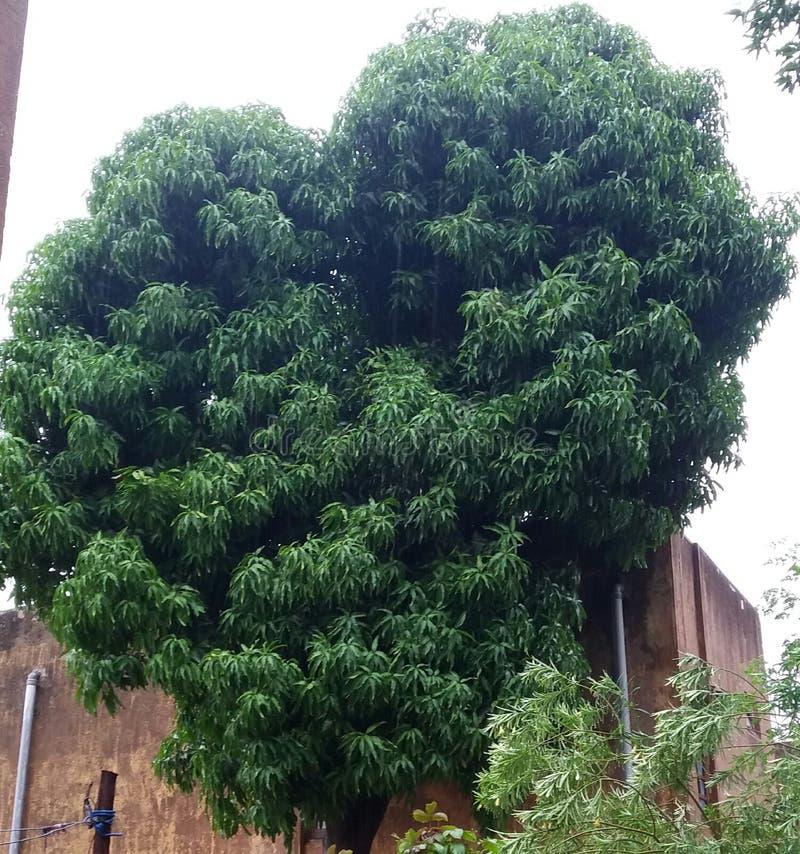Aardinstallaties en bomen royalty-vrije stock foto