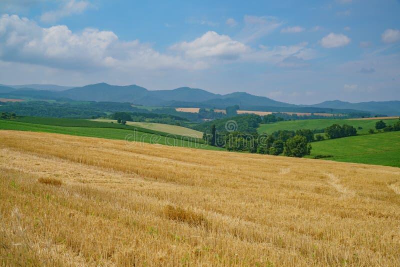 Aardlandschap met blauwe hemel en plantaardig landbouwbedrijf stock afbeeldingen