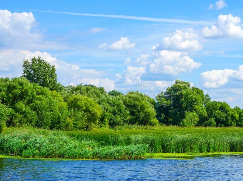Aardlandschap met de bomen van de meerrivier in bosriet en weide op een zonnige dag van de de lentezomer met blauwe gedeeltelijke stock fotografie
