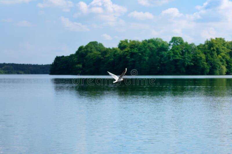 Aardscène van zeemeeuw die over het water van een meer vliegen royalty-vrije stock fotografie