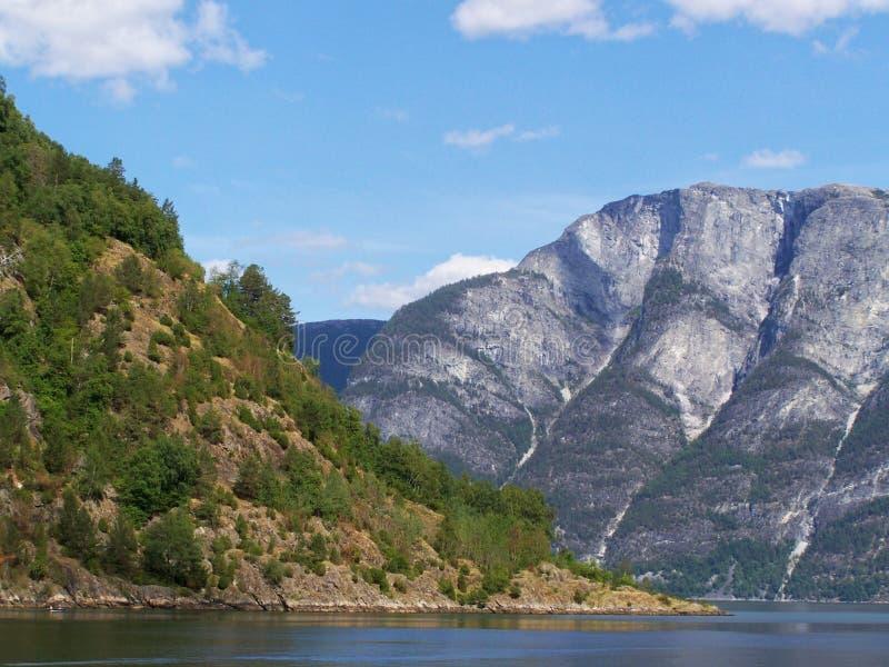 Aardstijging in het hout, het water van de fjord, Zonnige dagachtergrond stock afbeeldingen