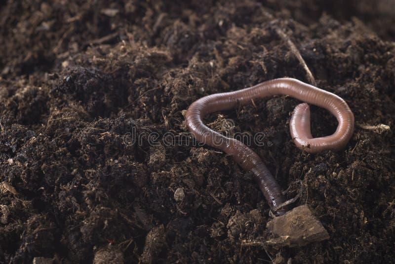 Aardworm royalty-vrije stock fotografie