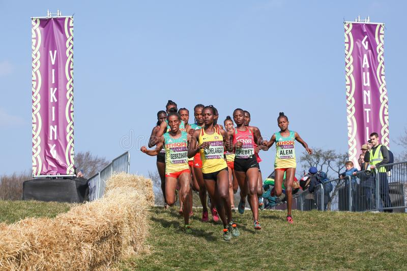 IAAF Mikkeller World cross country championship in Aarhus Moesgaard 2019 with junior women race. Aarhus, Denmark - March 30 2019: IAAF Mikkeller World cross stock image