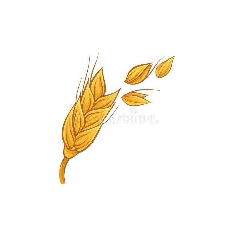 Aartje van gouden tarwe met korrels Landbouwgewas De landbouw en het oogsten thema Kleurrijke schets Getrokken hand vector illustratie
