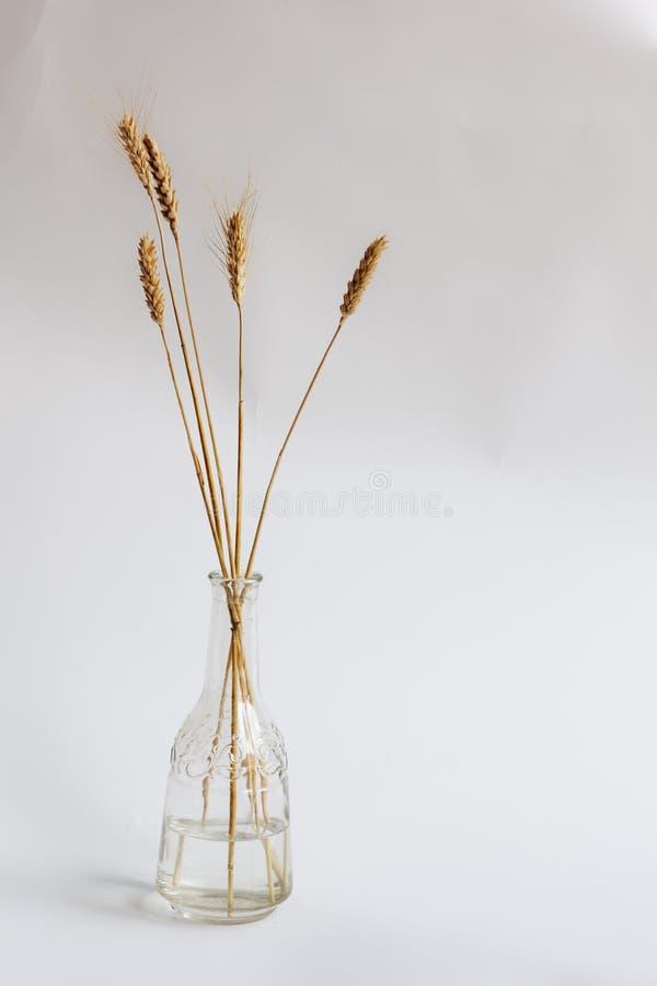 Aartjes in een vaas stock foto