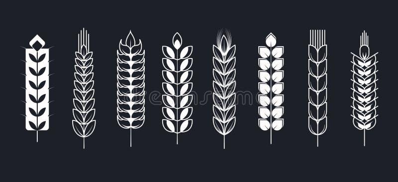 Aartjes of van de aaroren van de tarwekorrel vectorpictogrammen vector illustratie