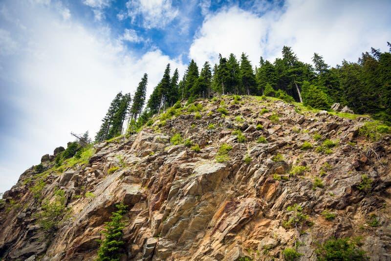 Abîme de falaise de montagne avec les piens verts photographie stock