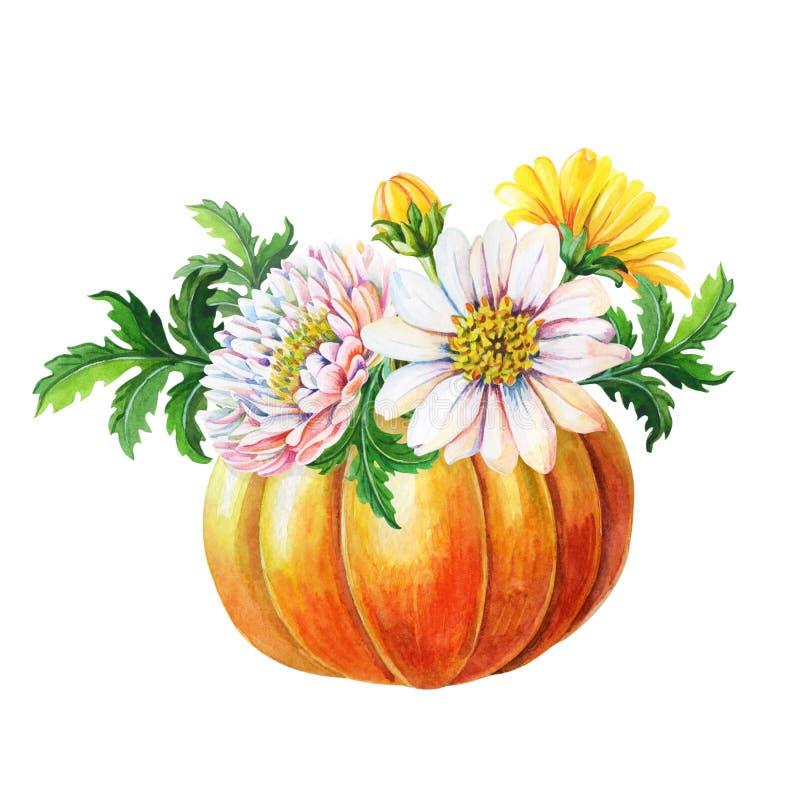 Abóbora alaranjada, crisântemos Ilustração da aquarela com flor, folhas verdes no fundo branco Autumn Harvest ilustração royalty free