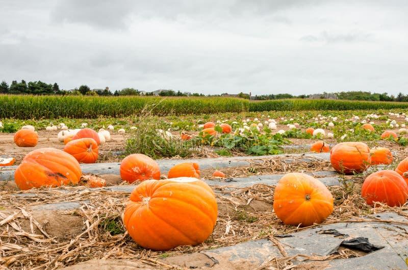 Abóbora arquivada em uma exploração agrícola do país no outono imagens de stock royalty free