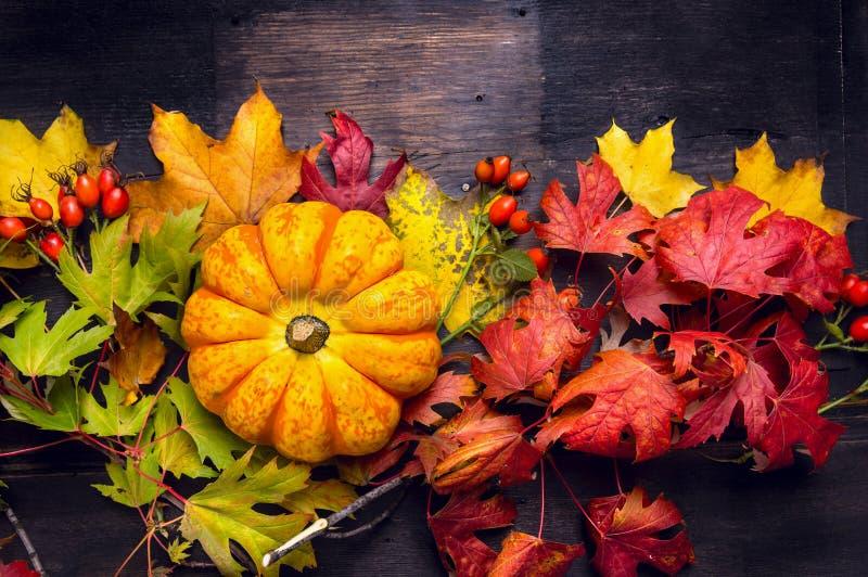 Abóbora bonita nas folhas de outono coloridas, fundo de madeira escuro fotos de stock