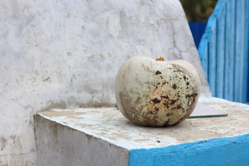 Abóbora branca enlameada imagem de stock