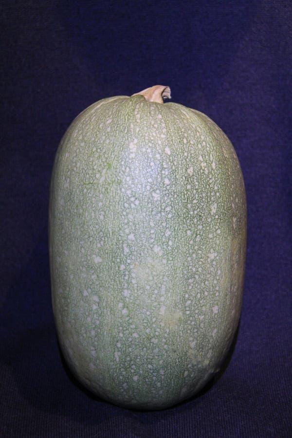 Abóbora com claro - escudo verde foto de stock