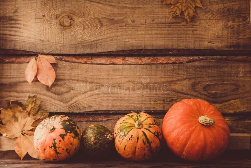 Abóbora com folhas, espaço para o texto cumprimentos sazonais, outono foto de stock royalty free