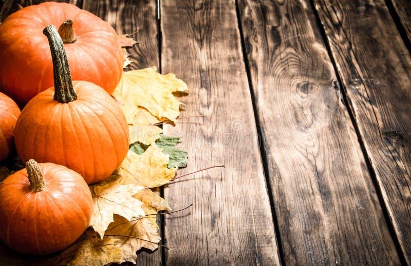 abóbora da colheita do utumn com folhas de outono imagens de stock royalty free