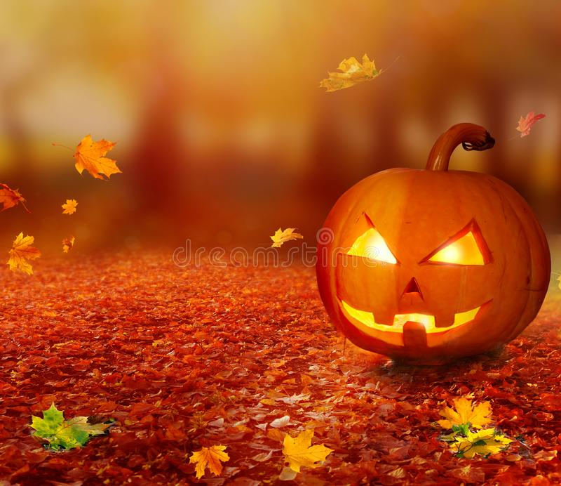 Abóbora de Dia das Bruxas na floresta do outono imagem de stock royalty free
