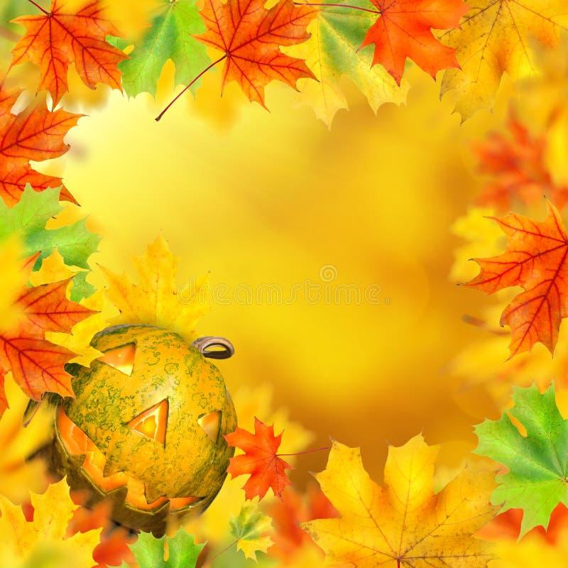 Abóbora de Dia das Bruxas no quadro das folhas de outono imagem de stock royalty free