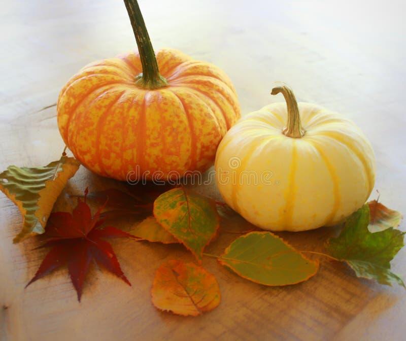 Abóbora de outono fotografia de stock royalty free