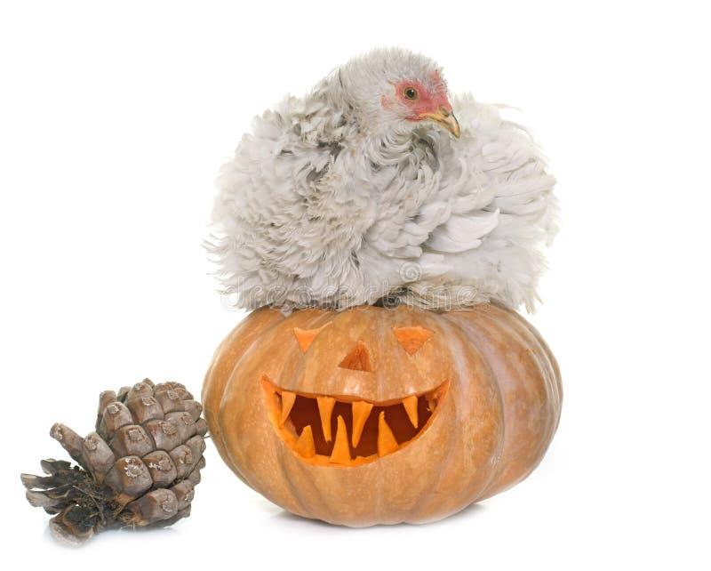 Abóbora do Dia das Bruxas e da galinha imagens de stock royalty free
