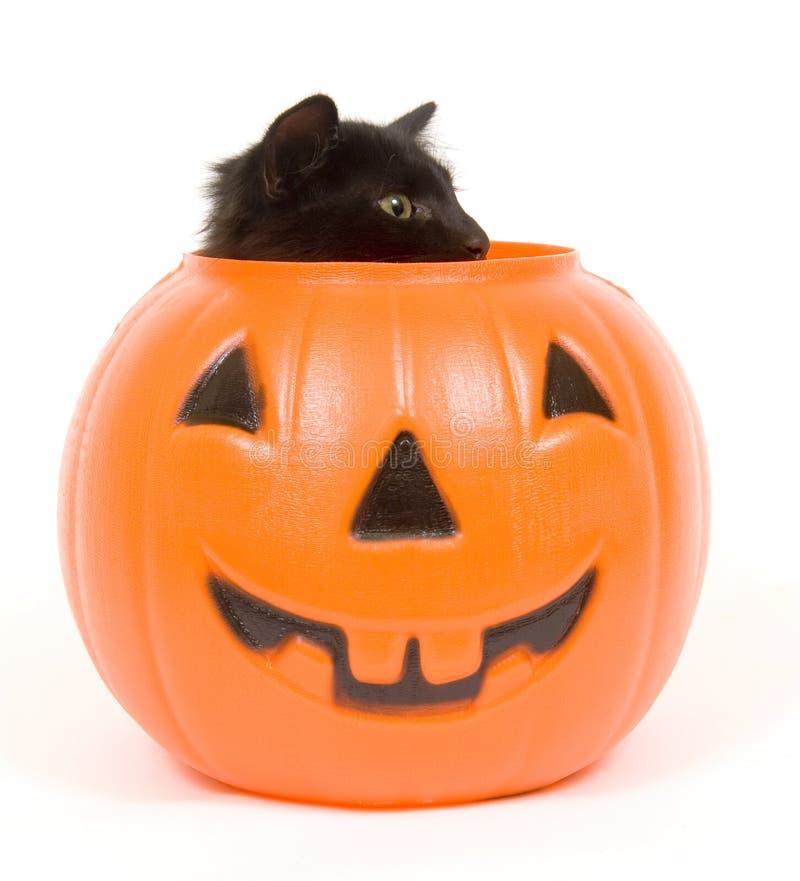 Abóbora do gato preto e do plástico - Halloween imagens de stock royalty free