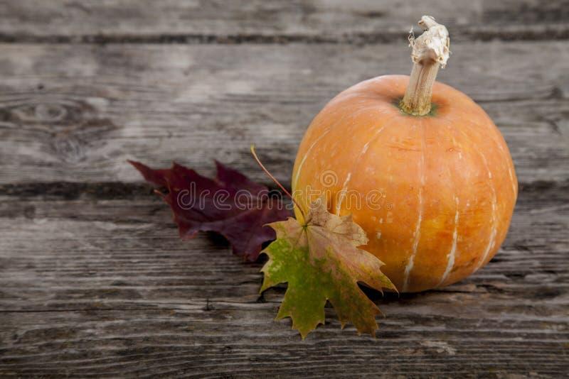 Abóbora e decoração das folhas da queda imagem de stock royalty free