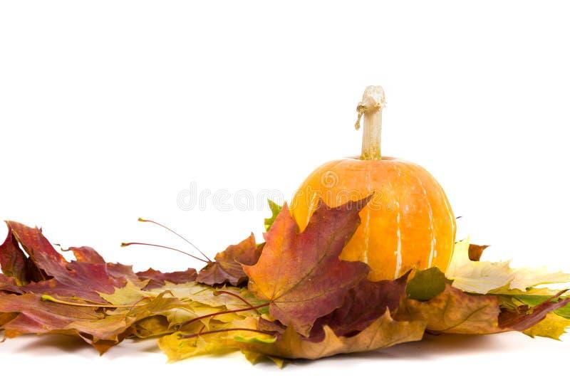 Abóbora e decoração das folhas da queda foto de stock