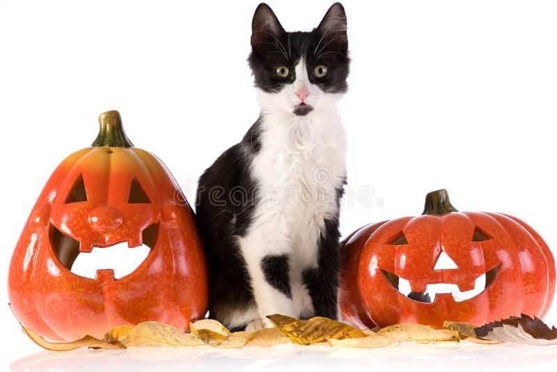 Abóbora e gato de Halloween imagem de stock royalty free