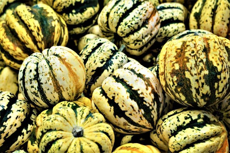 Abóbora em um mercado dos fazendeiros no outono fotografia de stock royalty free