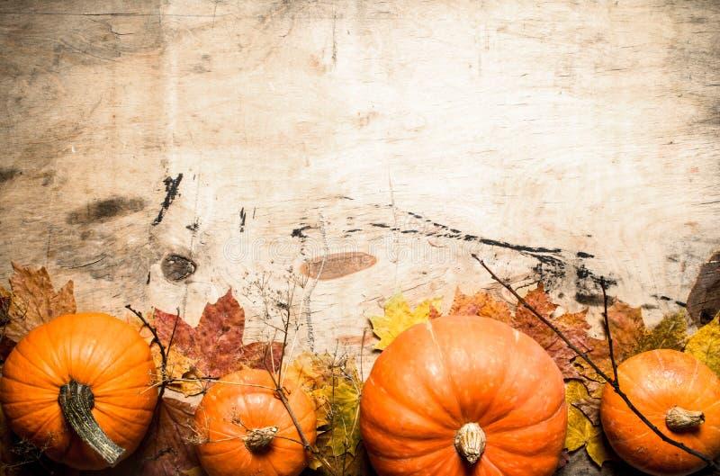 Abóbora fresca da colheita do outono com folhas e ramos imagem de stock royalty free