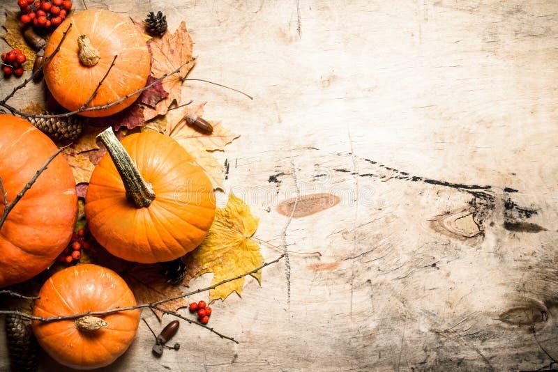 Abóbora fresca da colheita do outono com folhas e ramos imagens de stock royalty free