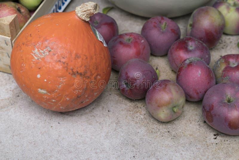 Abóbora pequena e maçãs vermelhas do jardim fotografia de stock royalty free