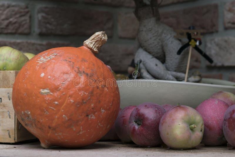 Abóbora pequena e maçãs vermelhas do jardim imagem de stock