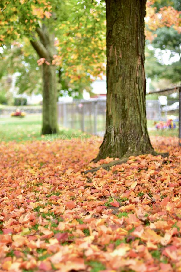 A abóbora tudo tempera o outono sazonal imagens de stock royalty free