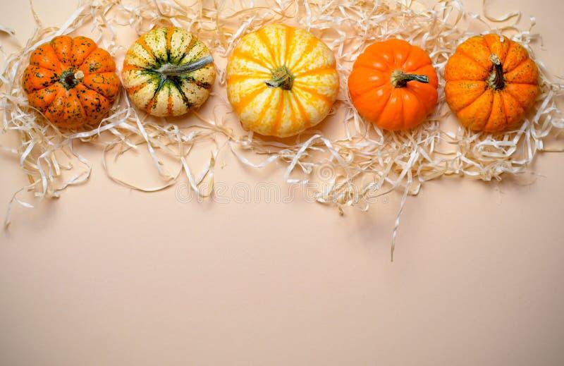 Abóboras, Autumn Thanksgiving e fundo coloridos diferentes de Dia das Bruxas imagem de stock