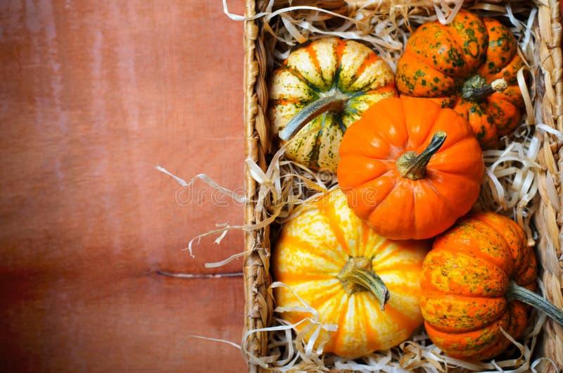 Abóboras, Autumn Thanksgiving e fundo coloridos diferentes de Dia das Bruxas imagem de stock royalty free
